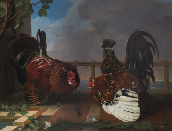 Two Cocks Fighting over a Tufted Hen