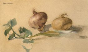 Still life with two onions
