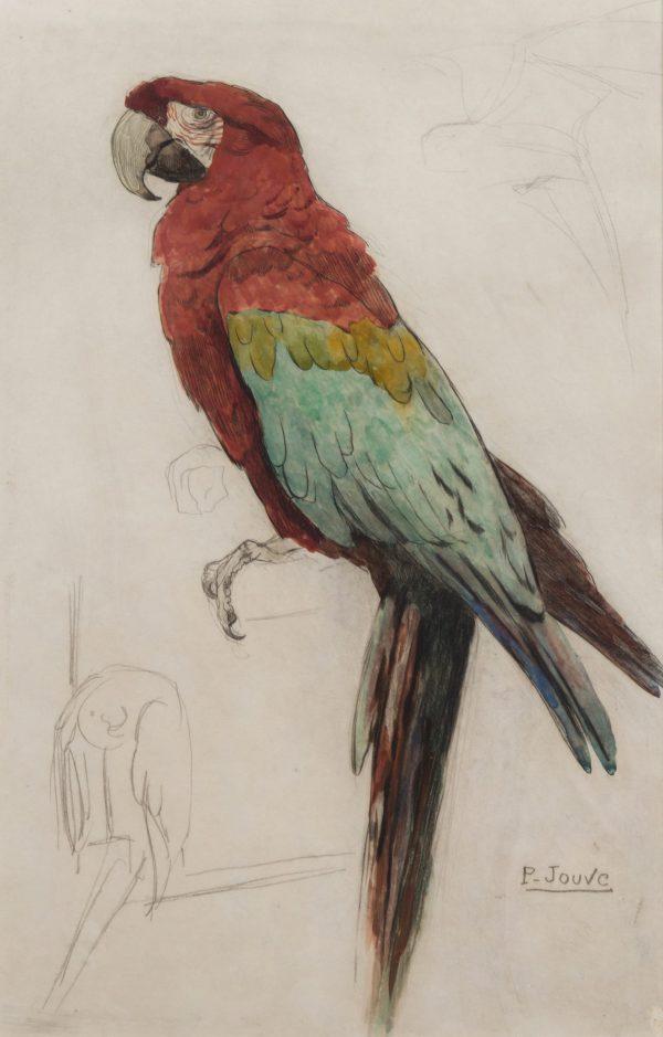 Un perroquet